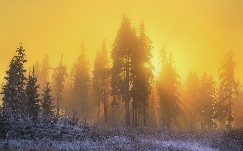 Wallpaper Forest Trees Snow Winter Sunrise Sun Rays