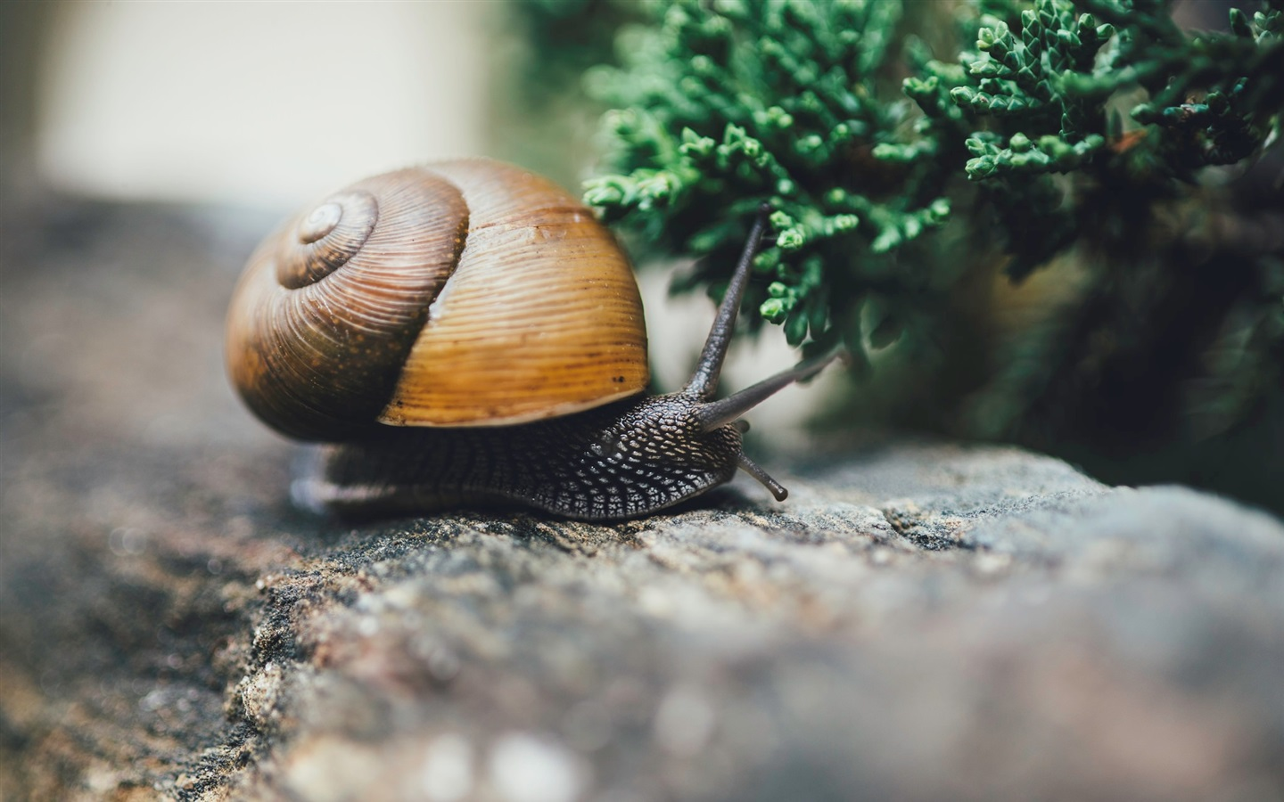 Wallpaper Snail, Insect Macro Photography 1920x1200 HD