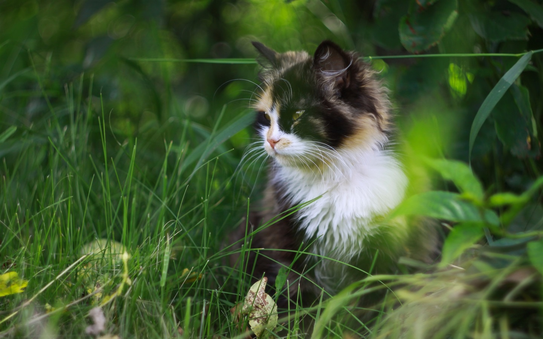 cute cat for 1440x900 - photo #29