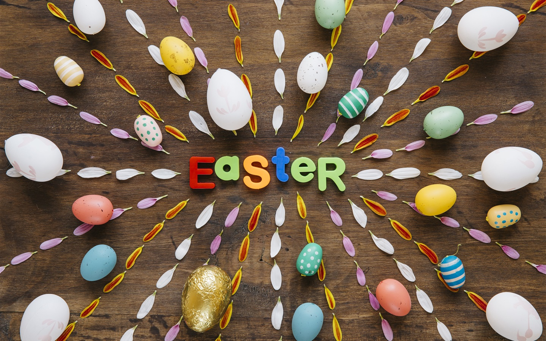 Fondos De Pantalla 1440x900 Tulipas Pascua Fondo De Color: Feliz Pascua, Huevos Coloridos, Pétalos Fondos De