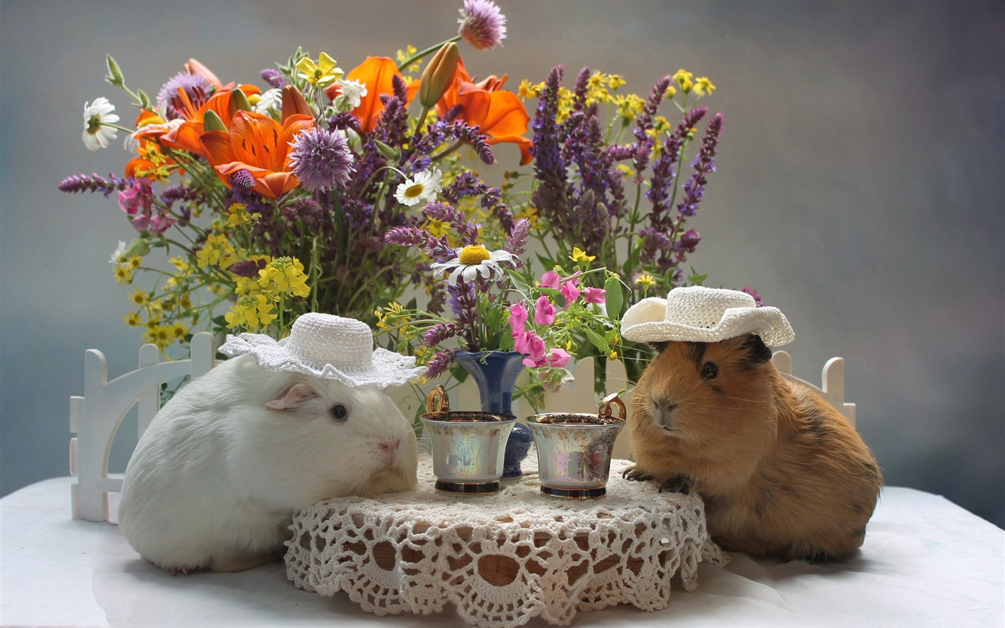 Wallpaper Two Guinea Pigs Drink Coffee Funny Animal