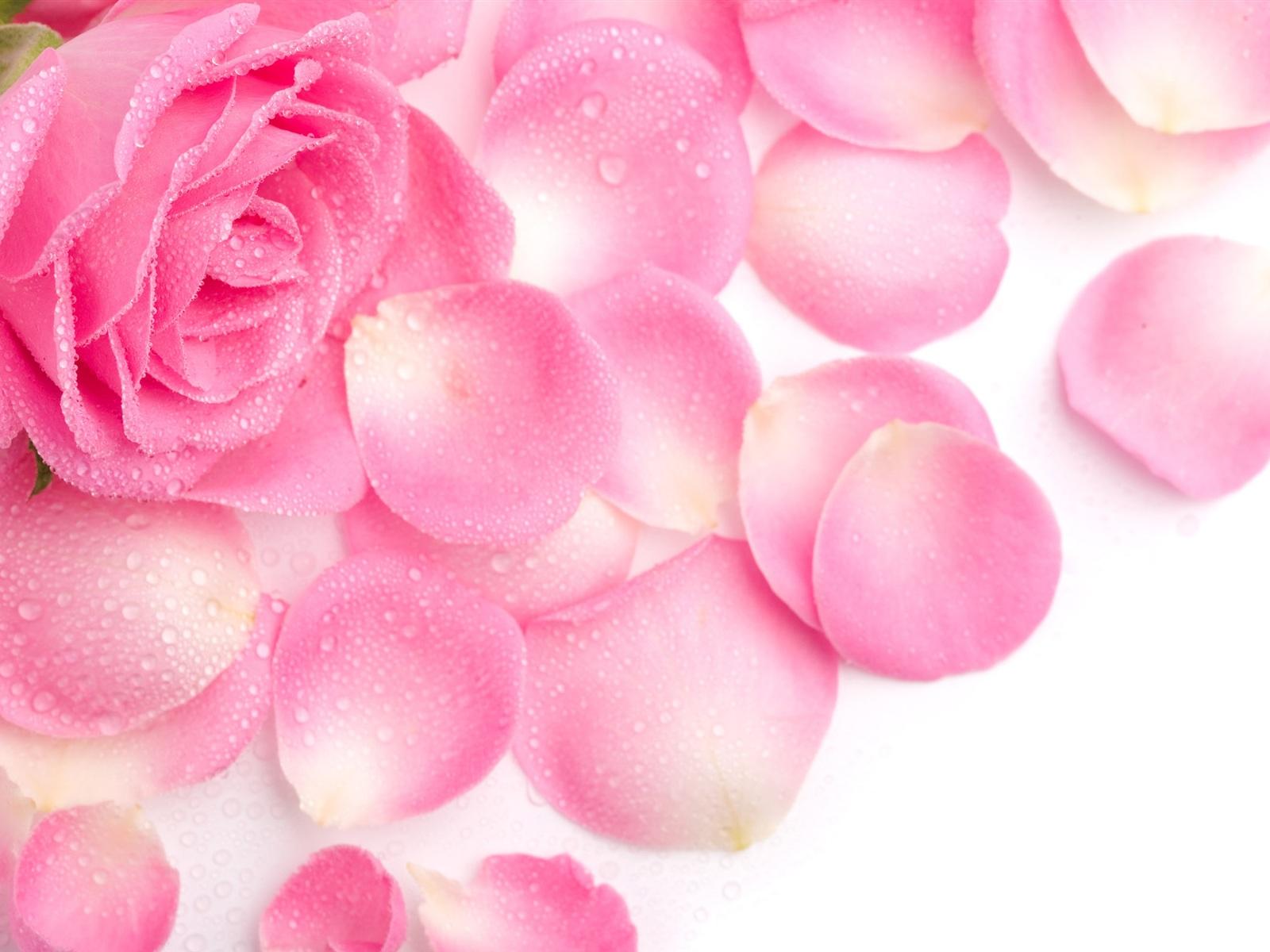 Pink rose petals wallpaper 1600x1200 resolution - Red rose petals wallpaper ...