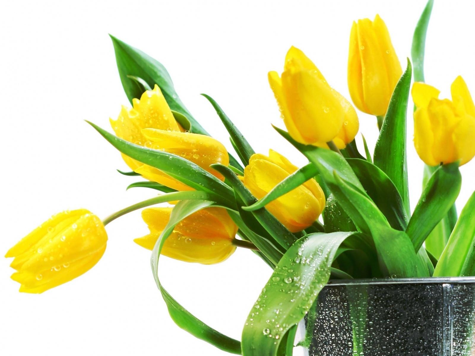 Fondos De Pantalla Hermosas Flores Tulipanes Amarillos 1600x1200 Hd