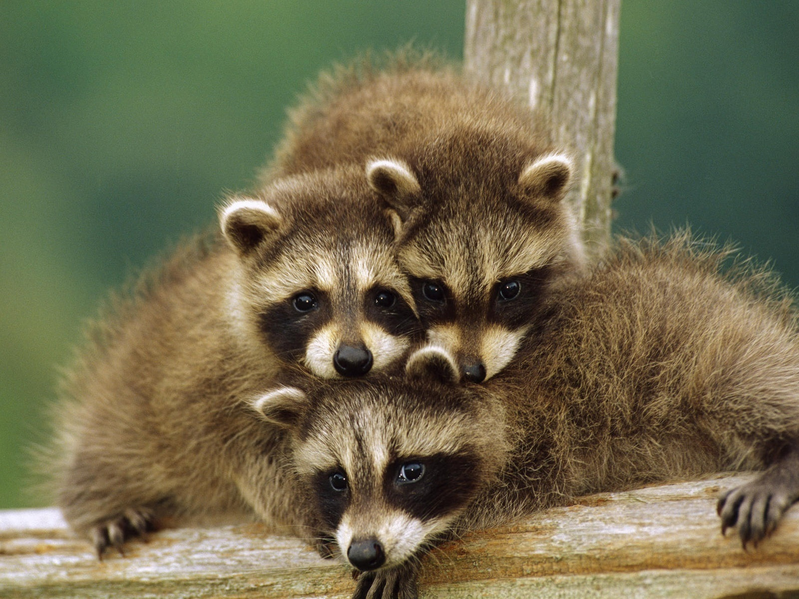 Cutest looking animals