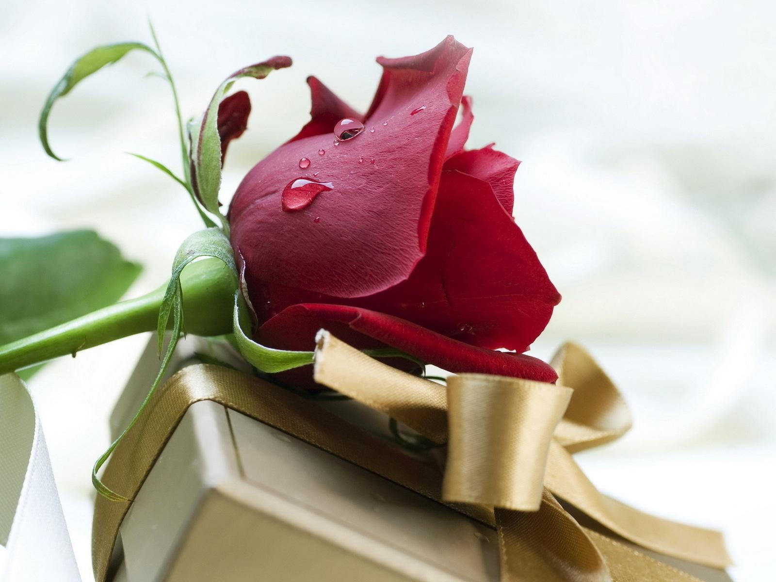розы красные подарок скачать