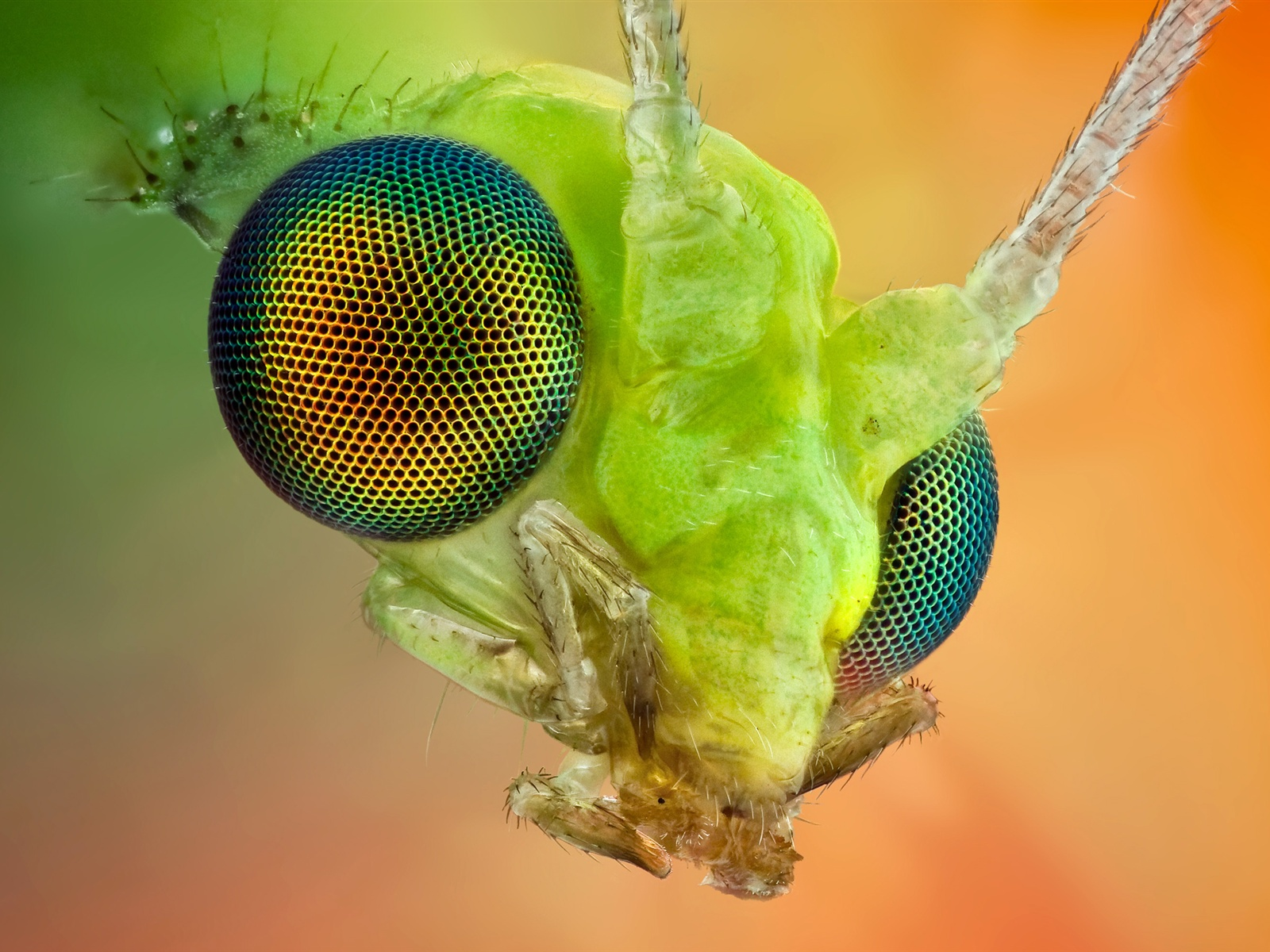 Wallpaper The Insect Compound Eye Macro 2560x1600 Hd