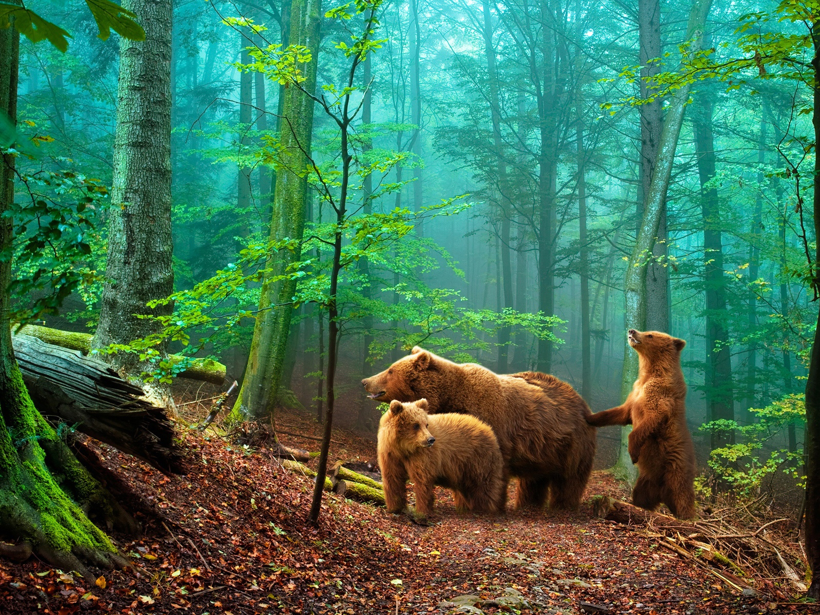Brown bears in the forest wallpaper - 1600x1200
