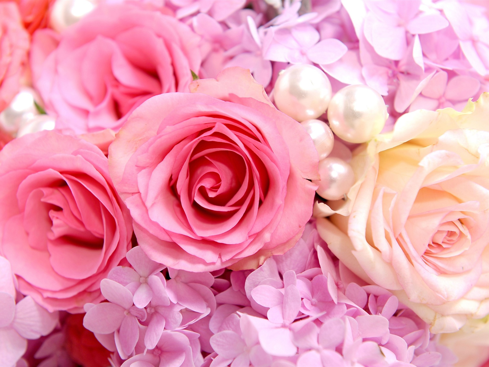 2560x1600 hd - Pink rose hd wallpaper ...