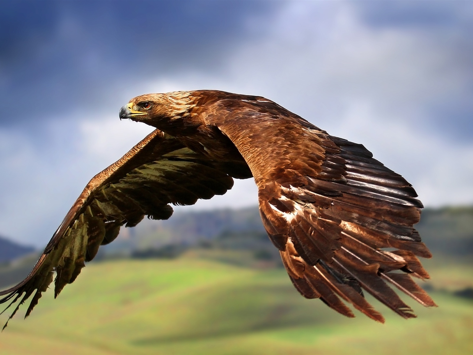 在天空翱翔的鹰 1600x1200