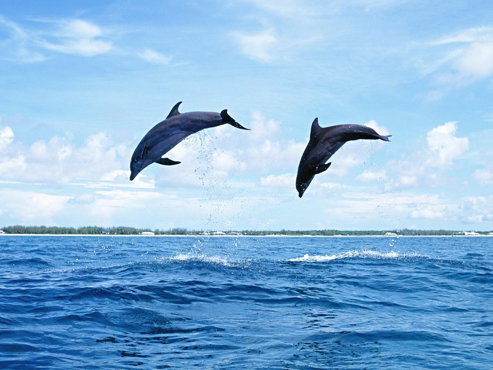 Sie sind hier nach hause tiere und vögel dolphins zwei delfine