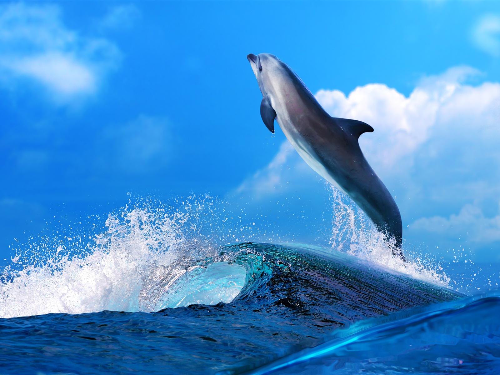 Hintergrundbilder beschreibung dolphin schönen tanz meereswellen