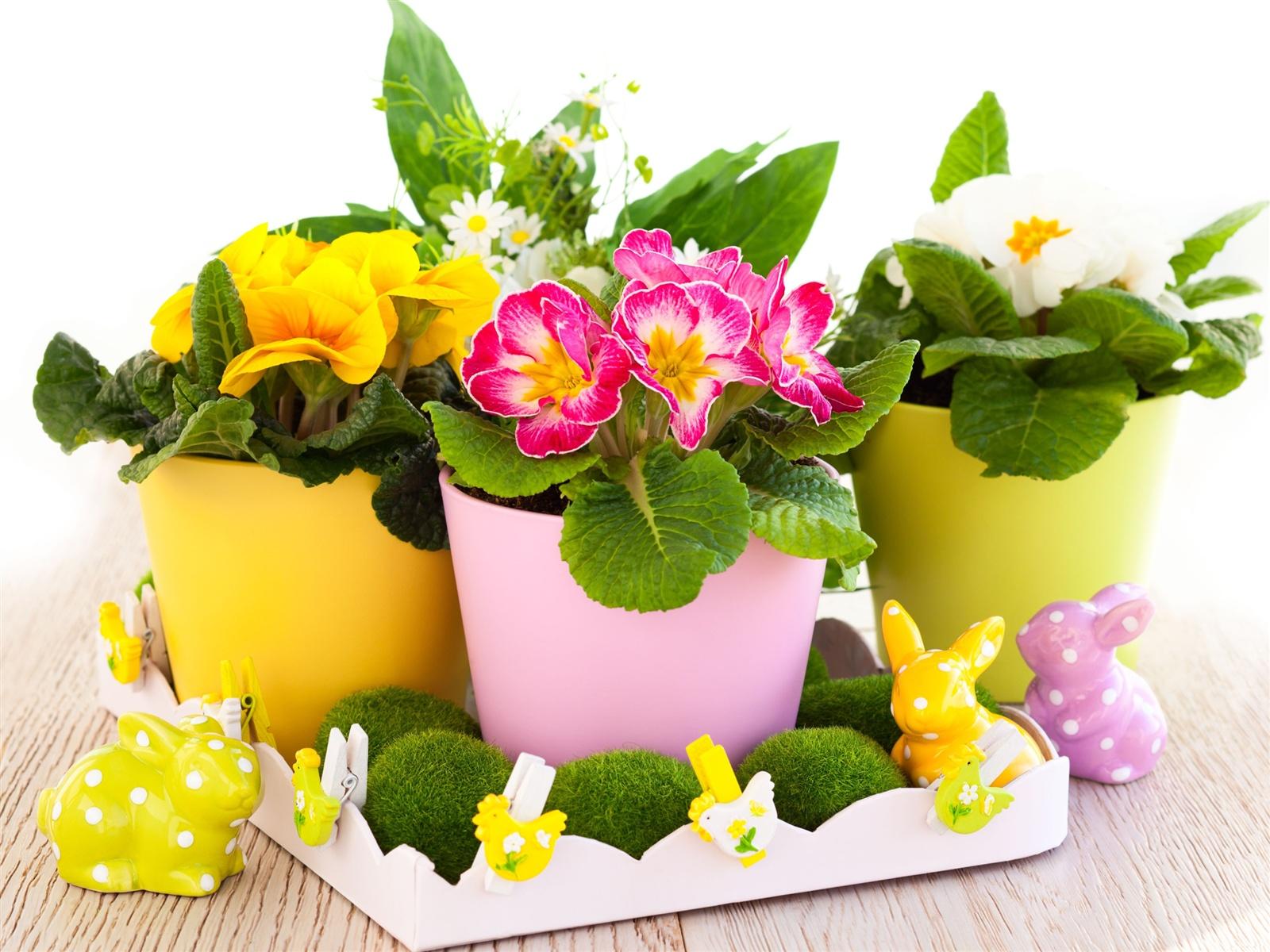 Easter flowers primrose wallpaper 1600x1200 resolution - Ostern wallpaper ...