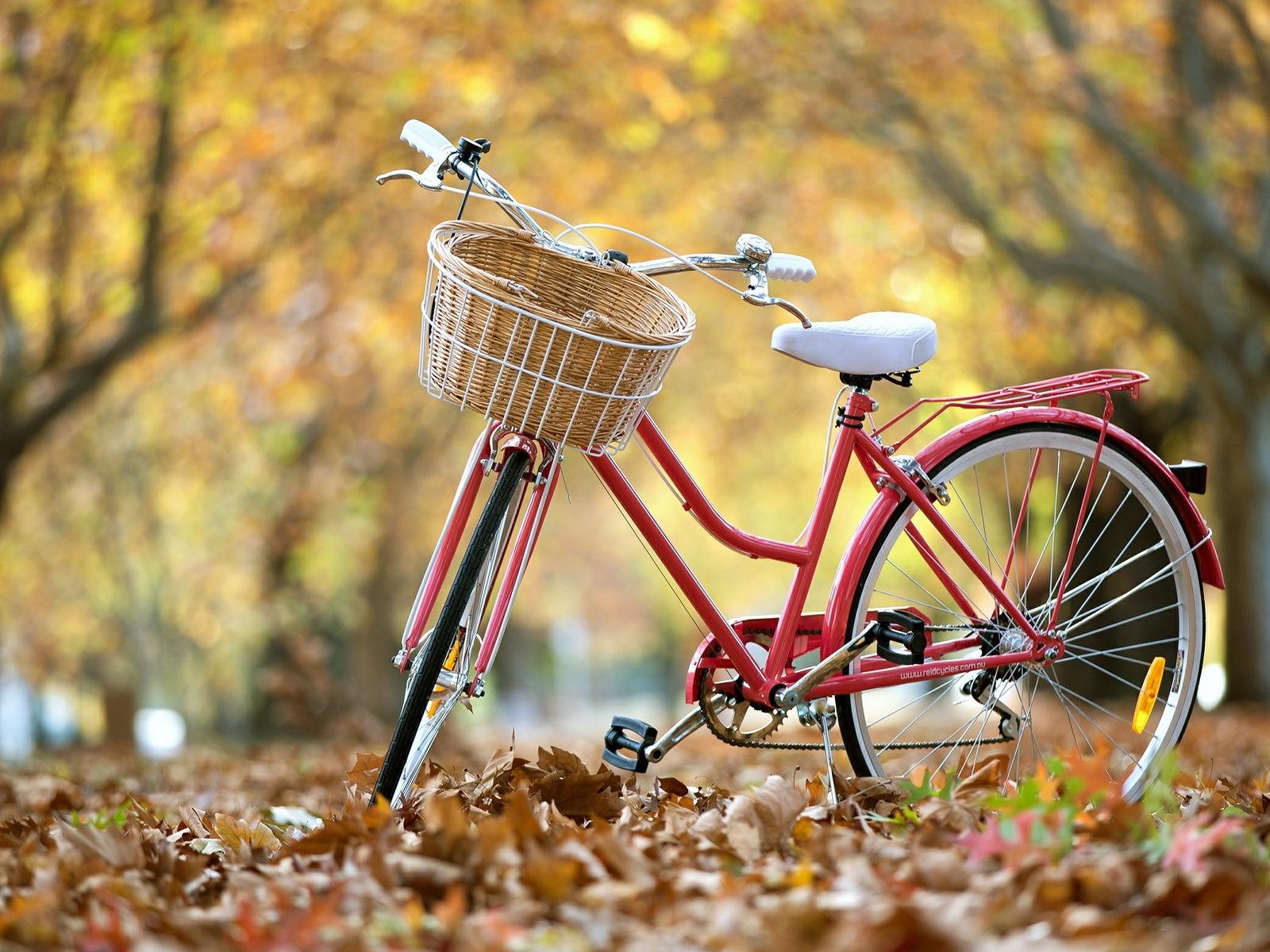 Straße Fahrrad, Herbst, Blätter 1920x1200 HD