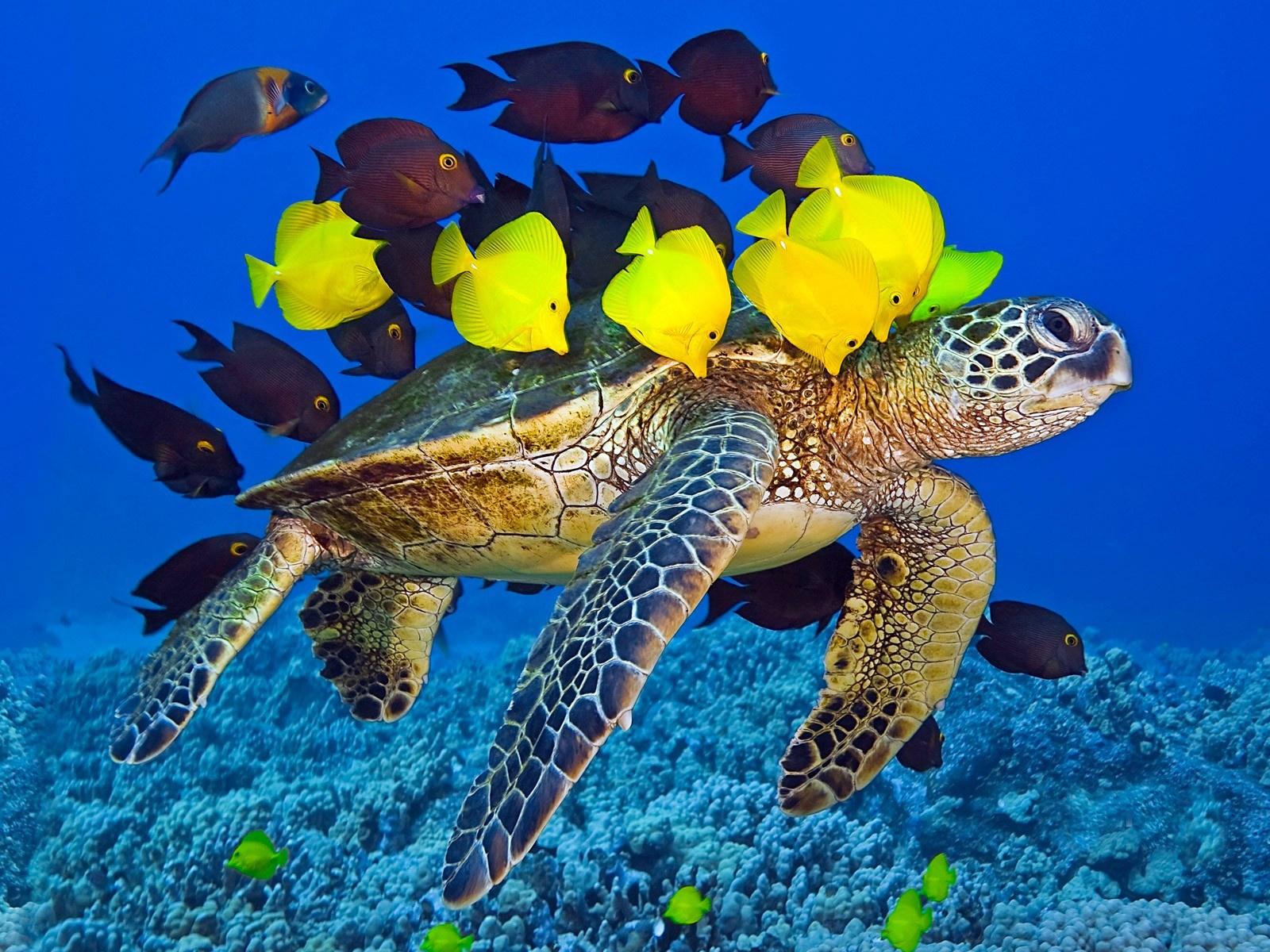 Картинки морской черепахи красивые
