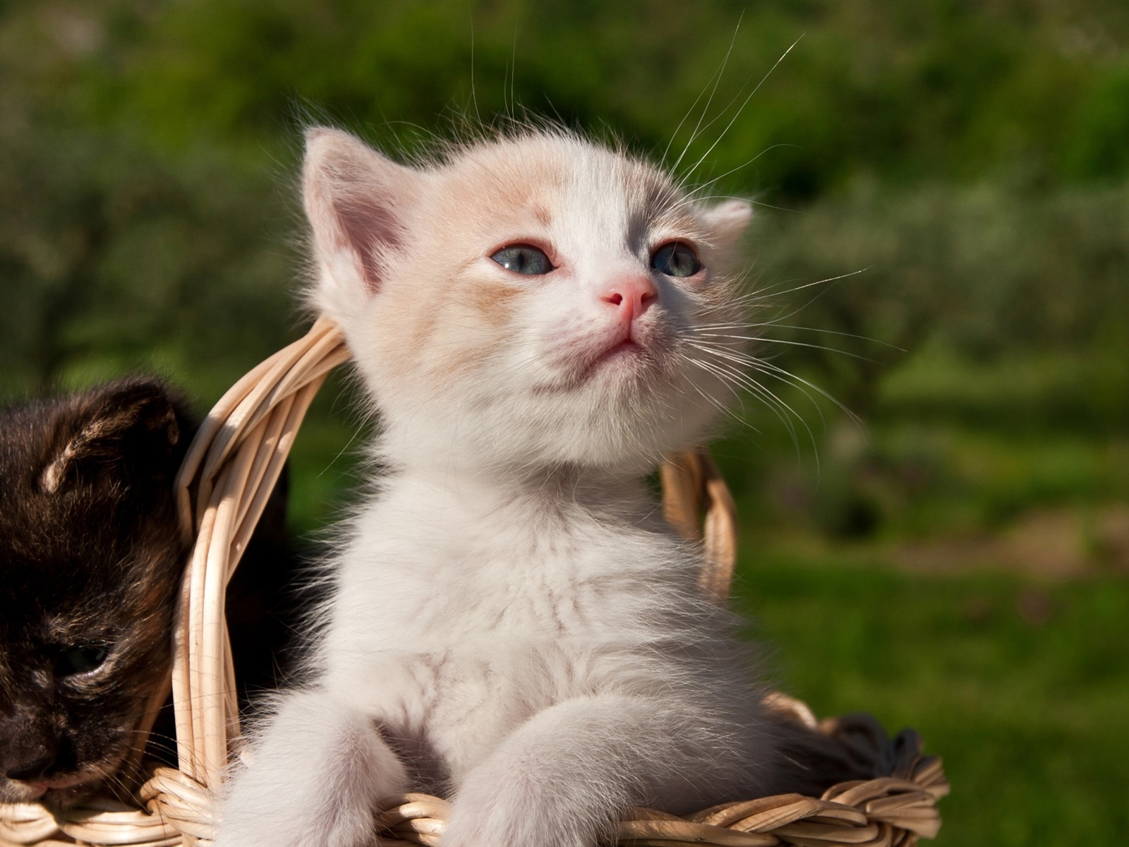 Посмотреть смешные картинки с котятами