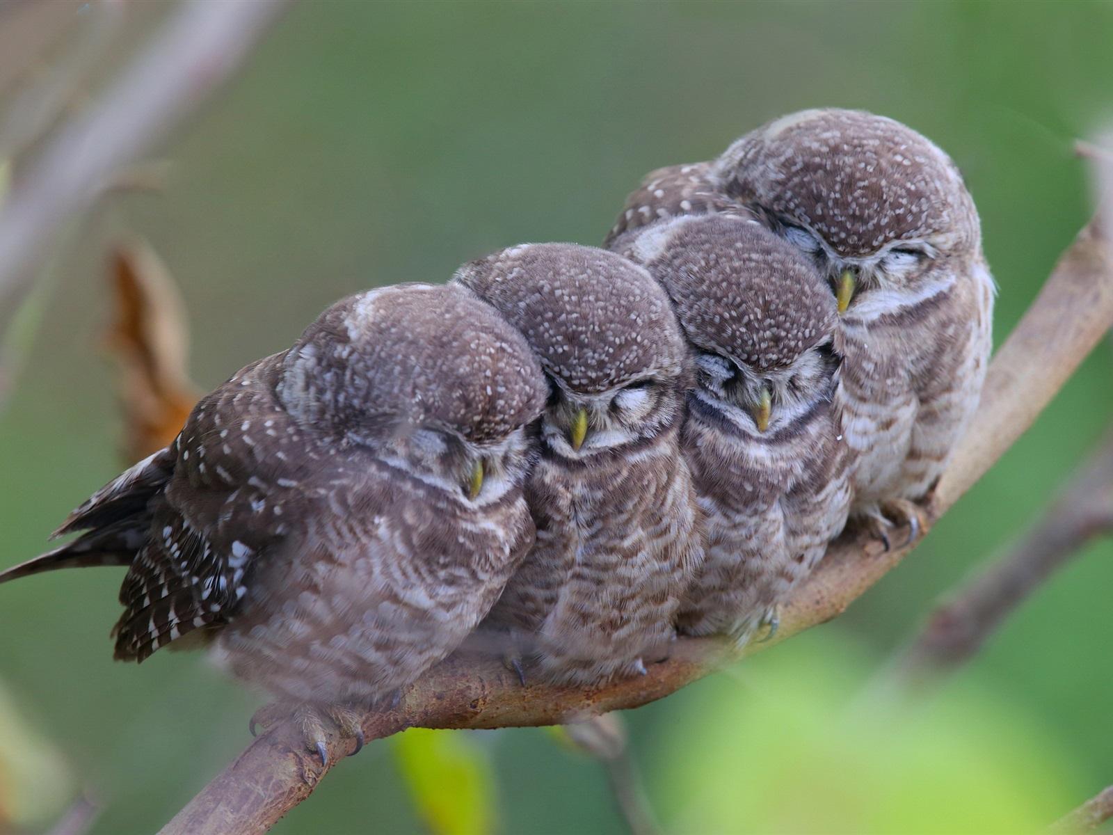 Радиолюбителях, картинка с спокойной ночи с птенцами