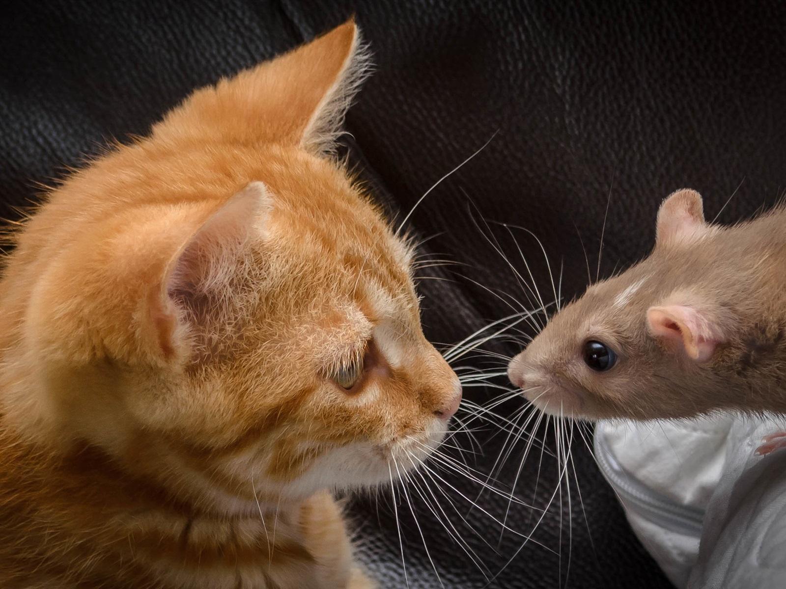 Смешные картинки с кошками и мышками