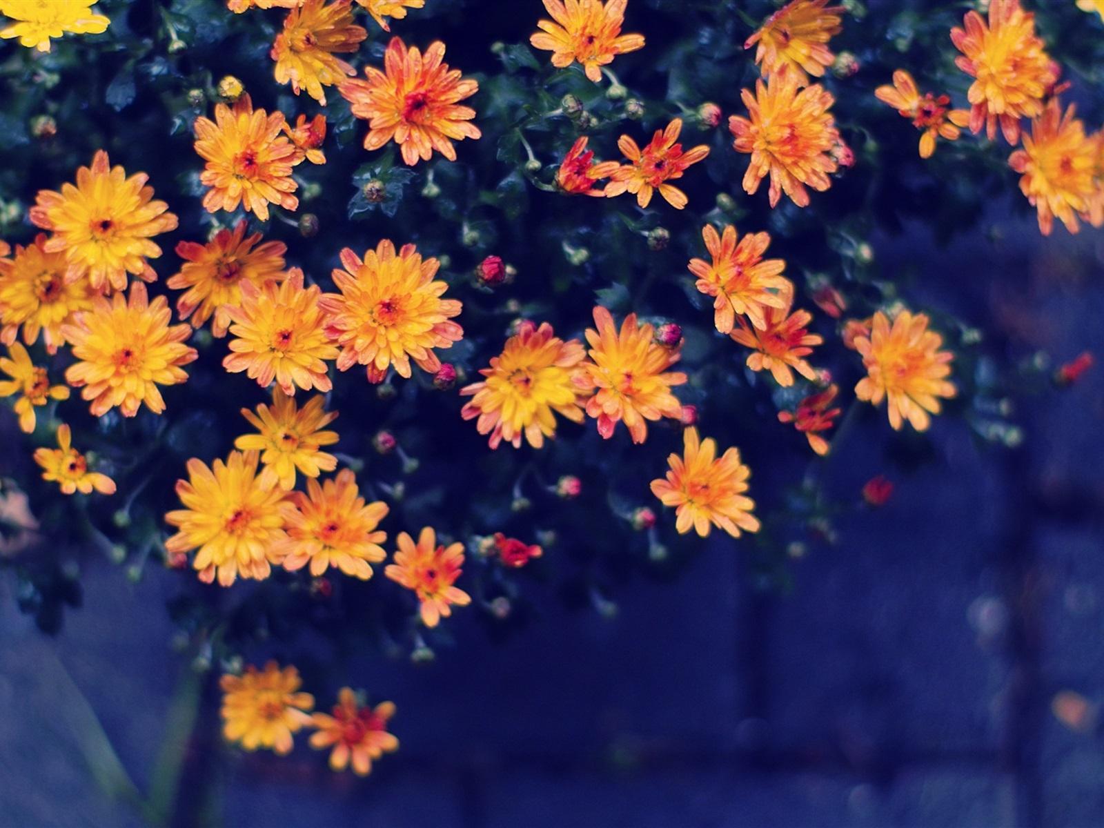 Fondos De Pantalla Flores Amarillo-naranja, Bokeh