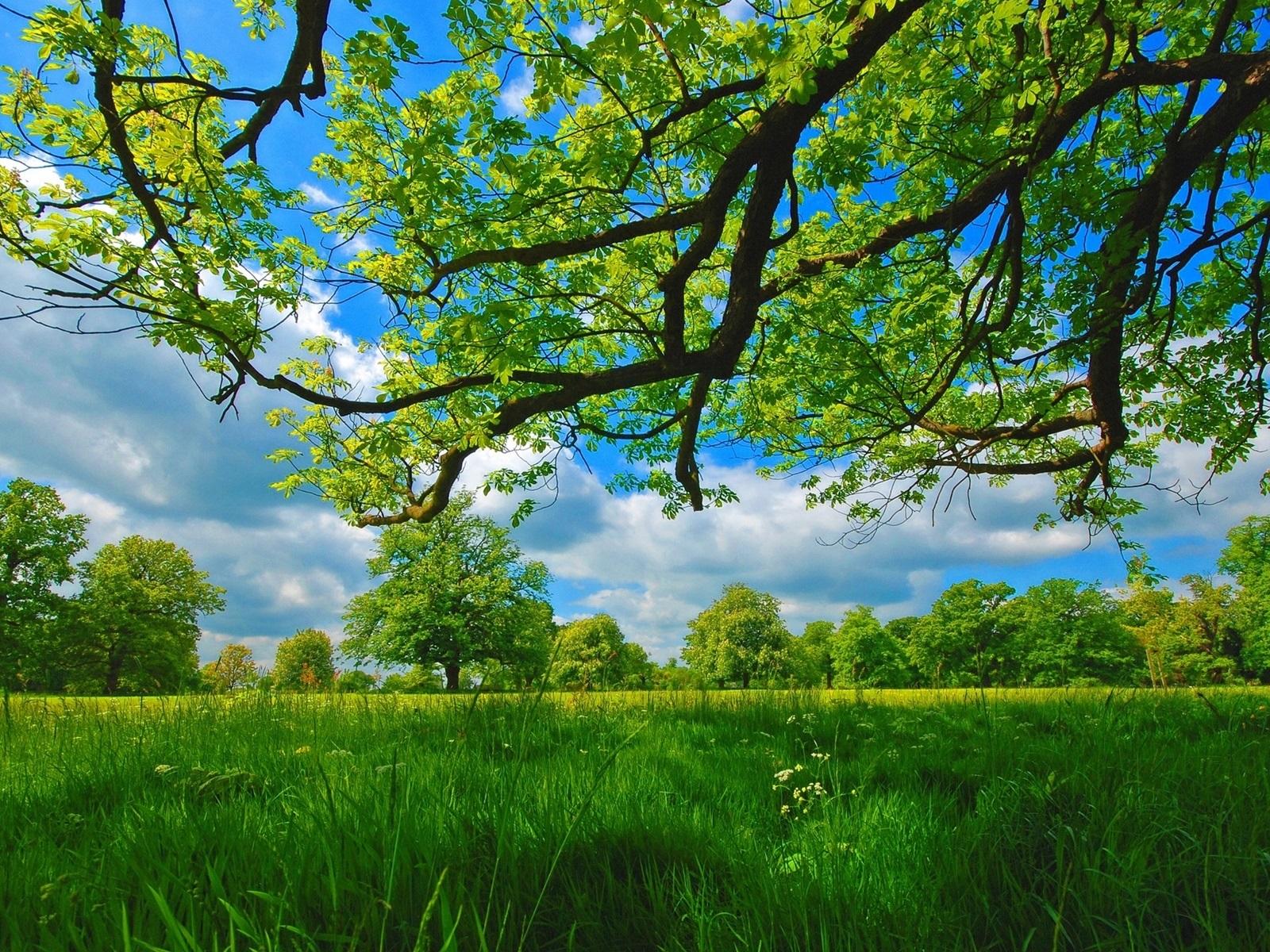 1600 x 1200 summer wallpaper - photo #11