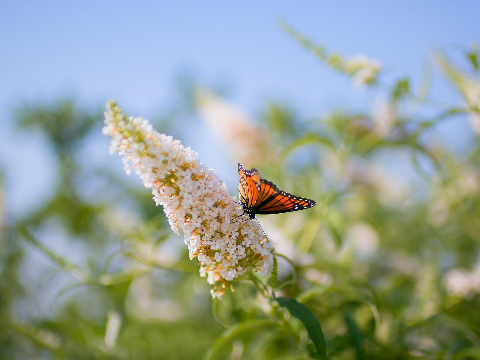 Макро бабочка скачать