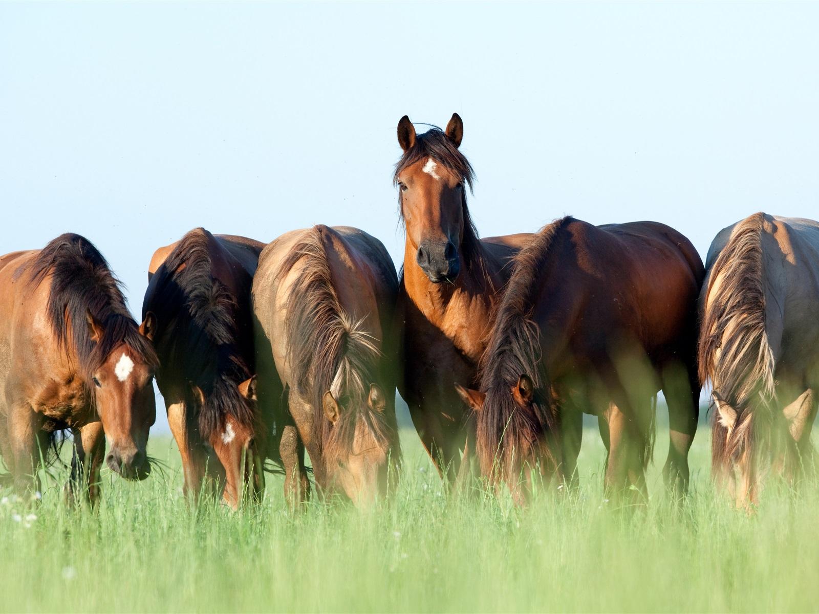 Wallpaper Horses Graze, Grass, Summer 3840x2160 UHD 4K
