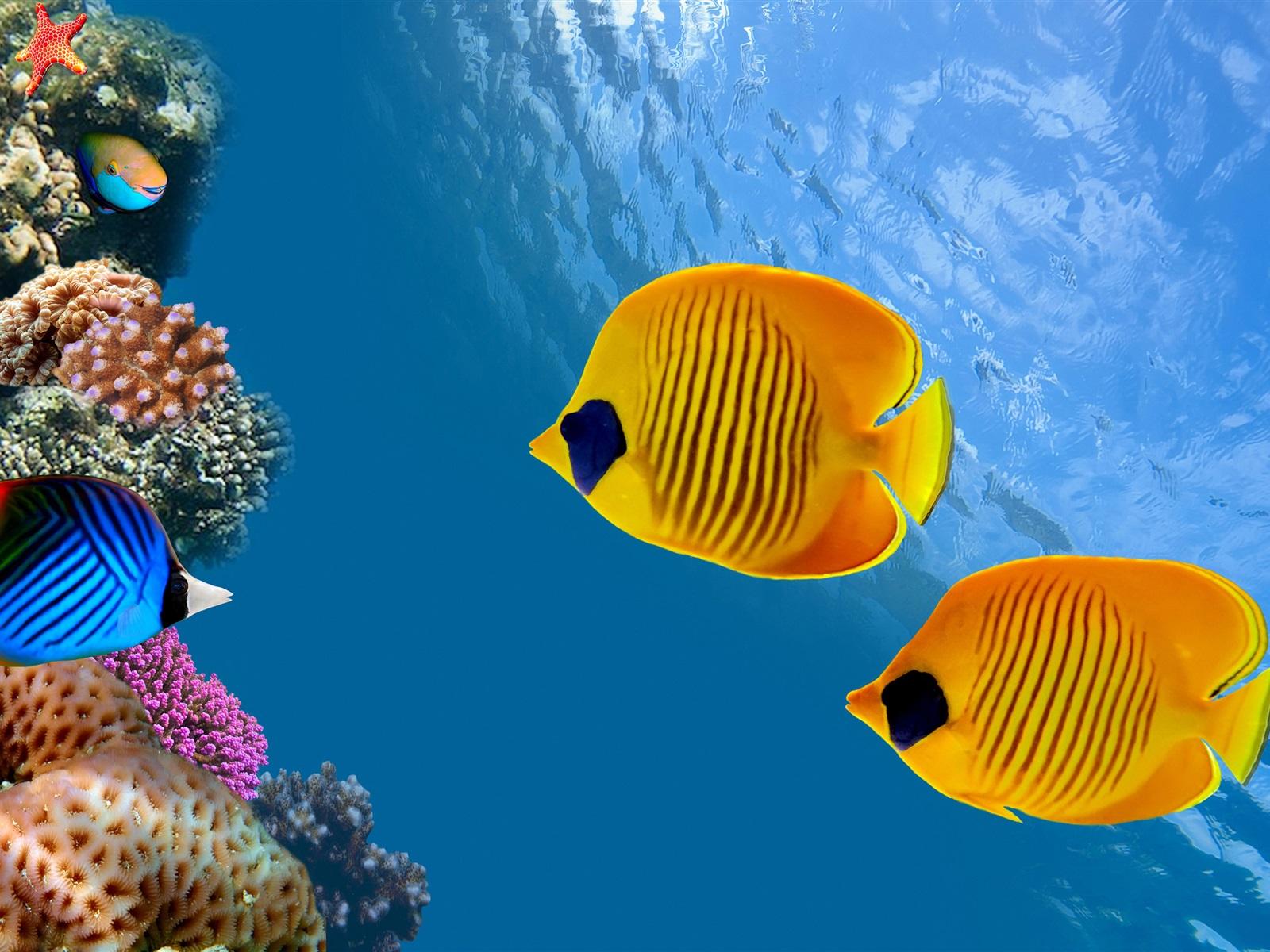 Hd Tropical Island Beach Paradise Wallpapers And Backgrounds: Tropische Fische, Clownfische , Cocos Island, Costa Rica