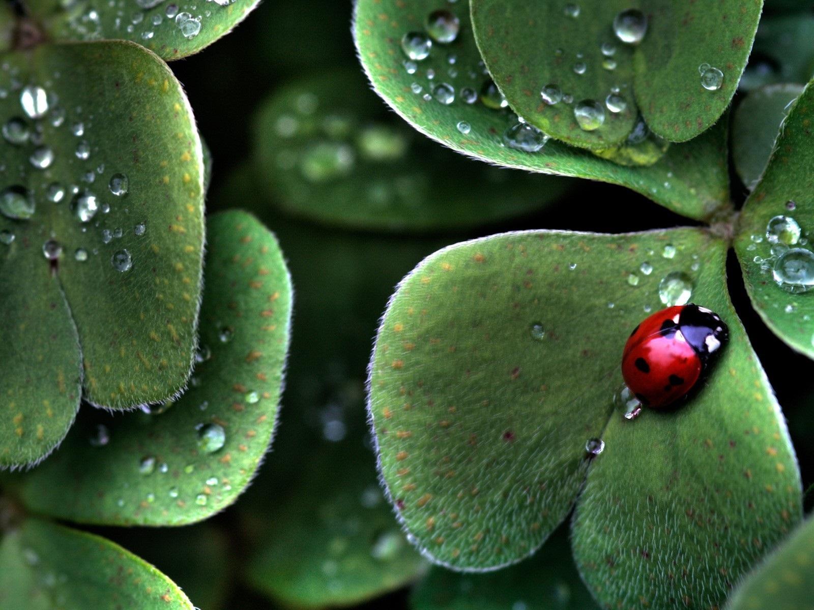 Hojas de color verde escarabajo roc o fondos de pantalla - Color verde hoja ...