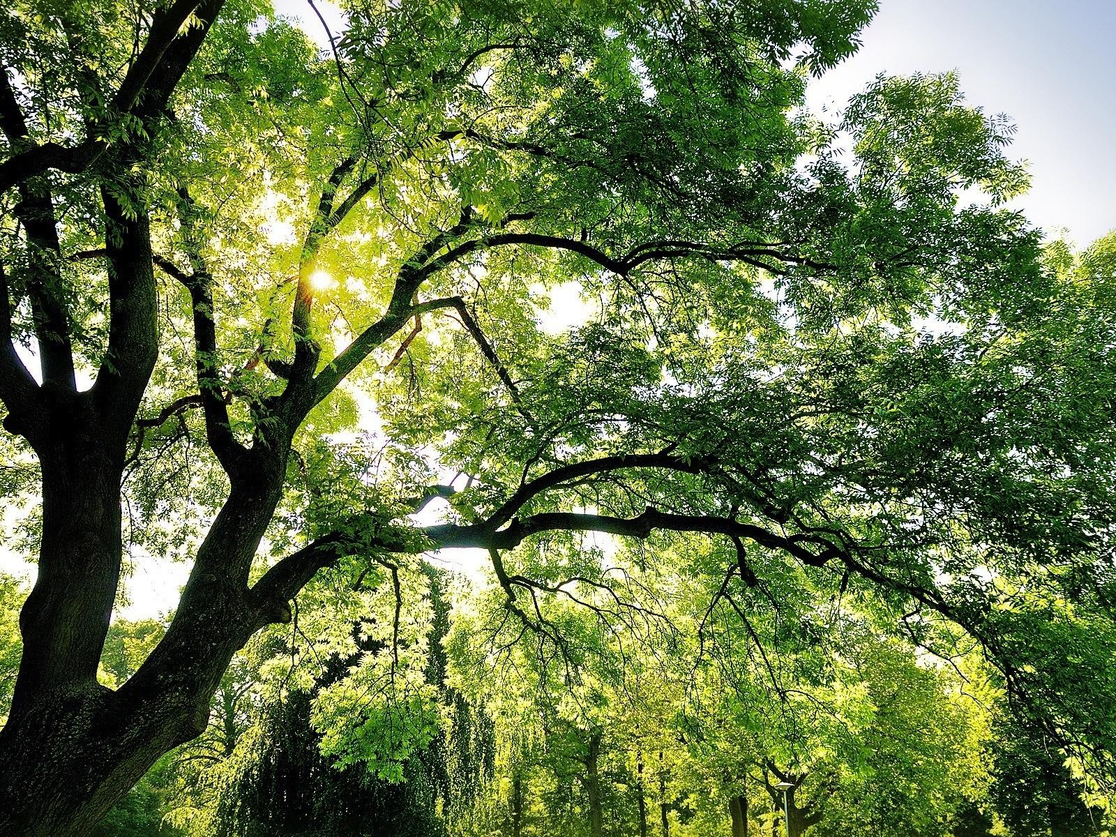 деревья природа ветка trees nature branch  № 439598 бесплатно