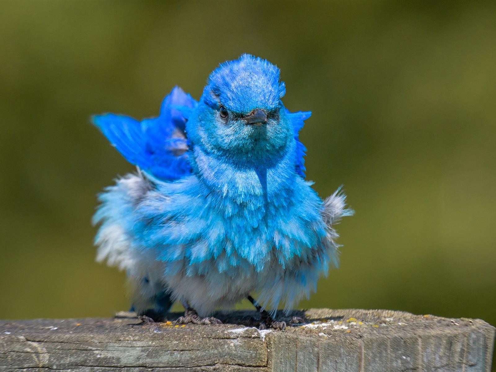 Прикольные картинки синего цвета