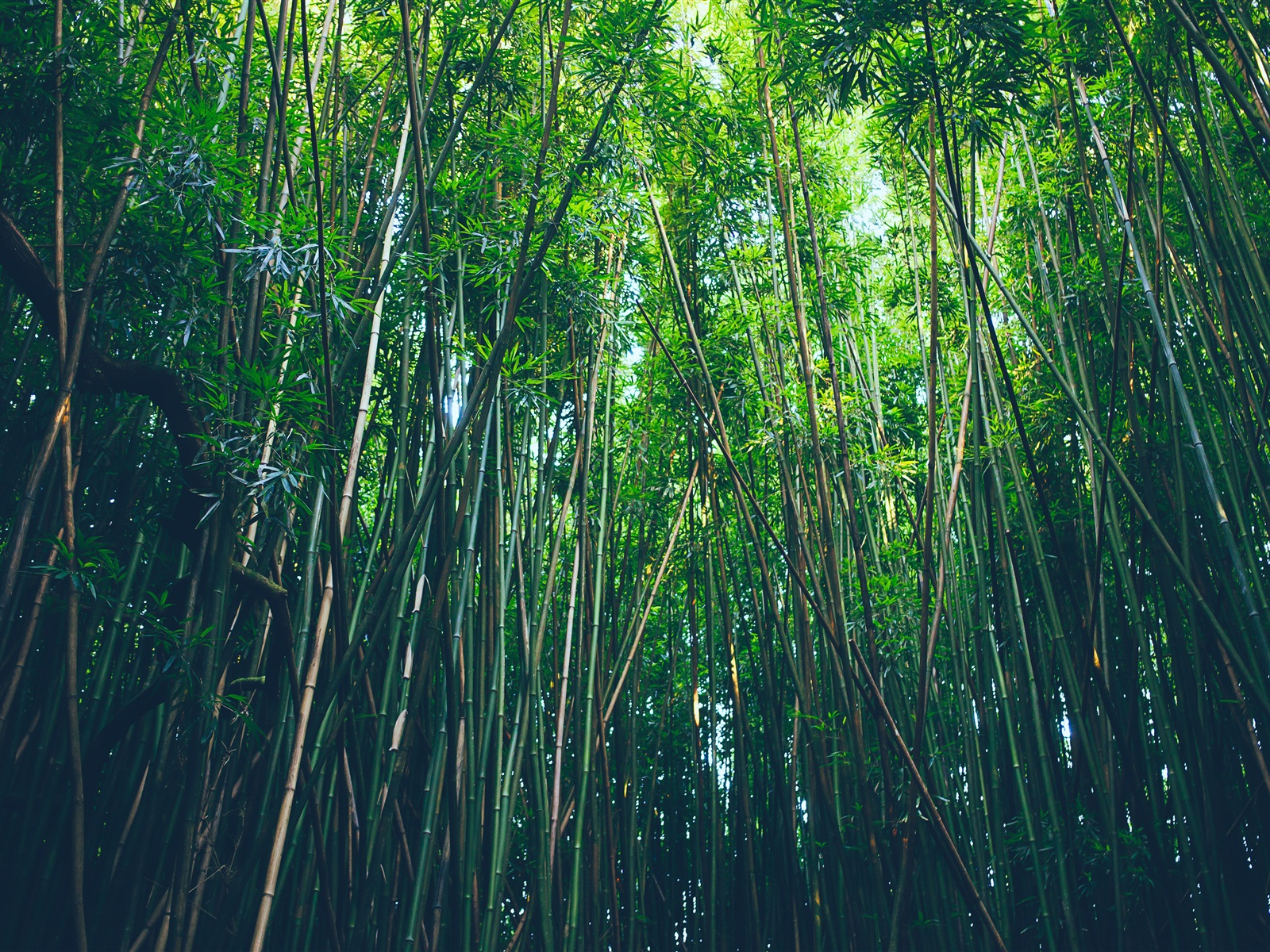16 Luxury Pubg Wallpaper Iphone 6: Fonds D'écran Forêt De Bambou, Nature 3840x2160 UHD 4K Image