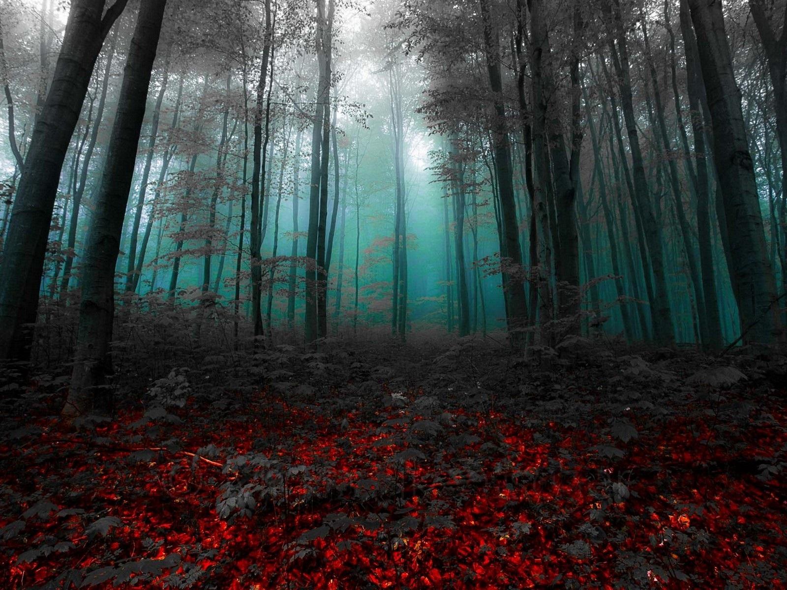 Обои темного леса