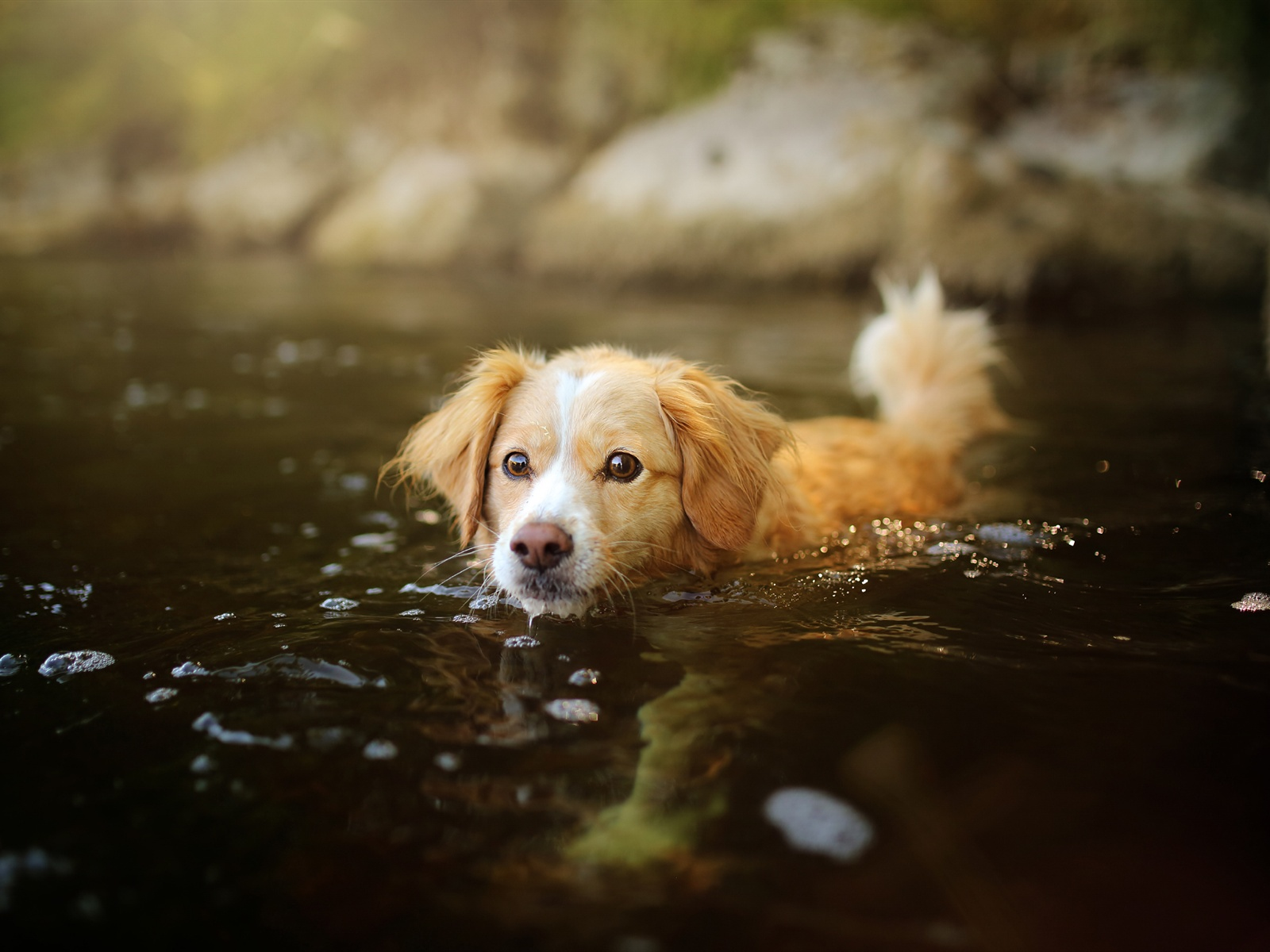 Can Dogs Swim In Autumn