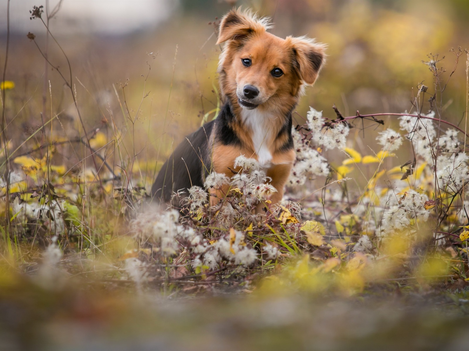 壁紙 かわいい犬 野生の花 19x10 Hd 無料のデスクトップの背景 画像