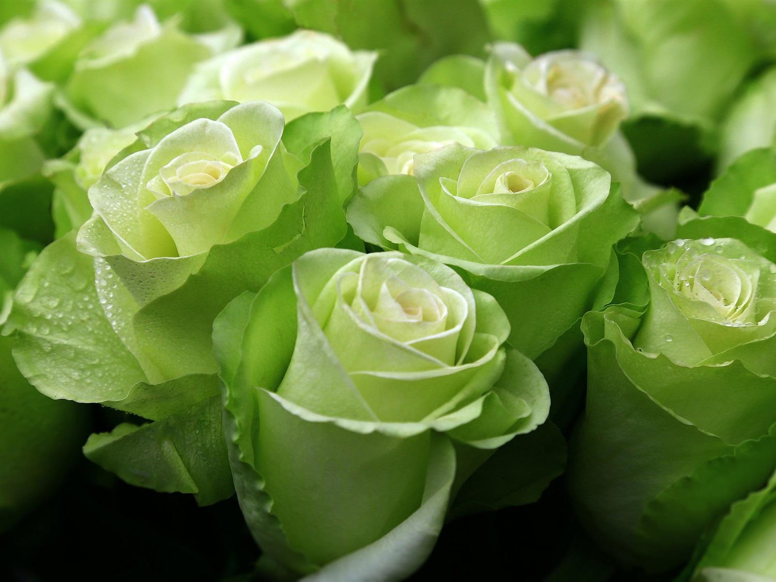 Зеленые розы букеты картинки, букет голубых
