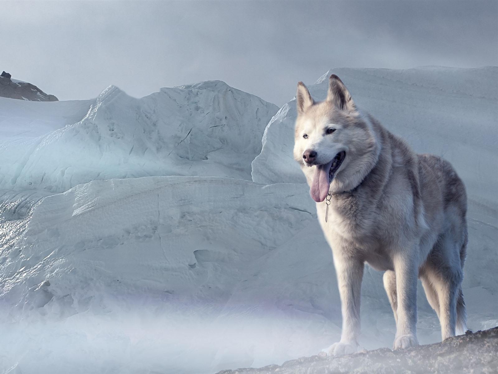 Perros Husky Siberiano Fondos De Pantalla Hd De Animales 2: Fondos De Pantalla Perro Husky Glaciar 2880x1800 HD Imagen