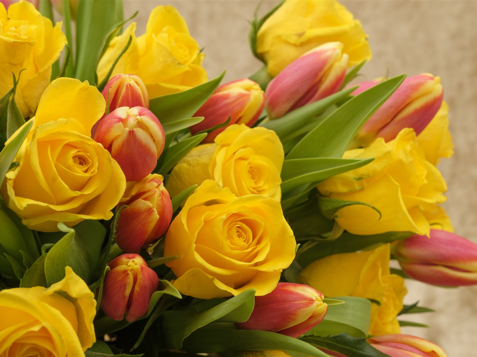 Картинки с желтыми тюльпанами и с пожеланиями