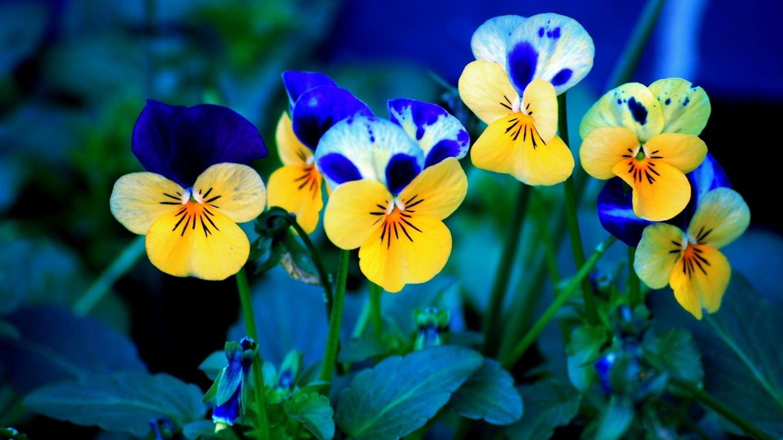 Синие цветы обои 1600x900 скачать обои