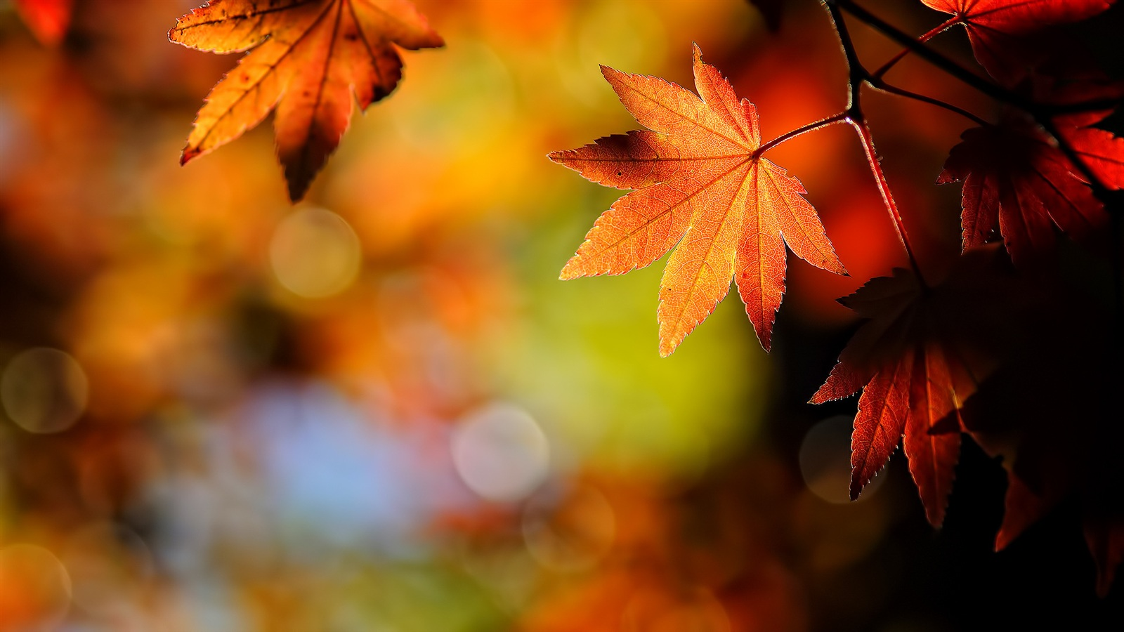 Autumn leaves Natur 1920x1080 Full HD 2K Hintergrundbilder ...