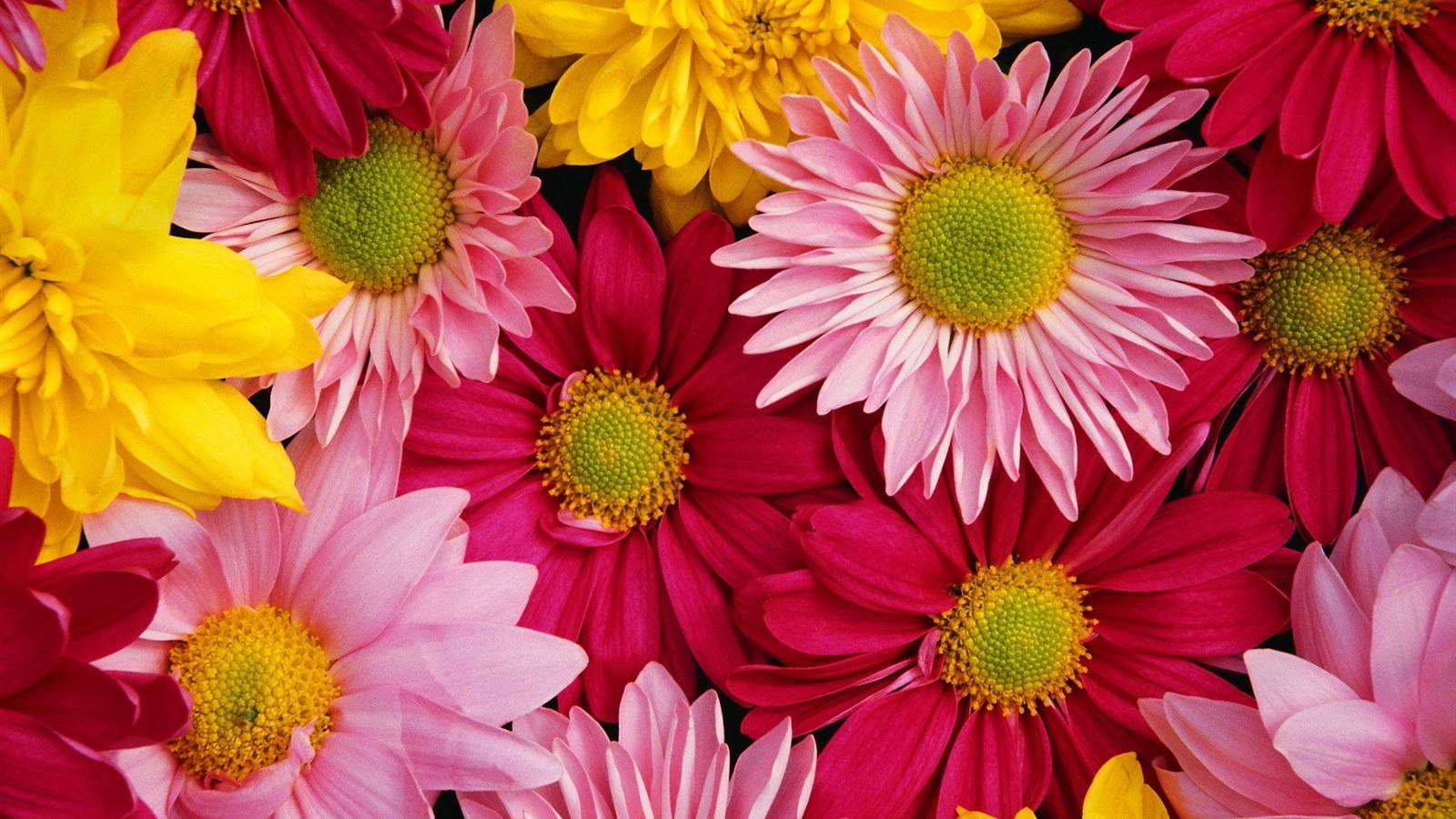 花の画像 p1_27