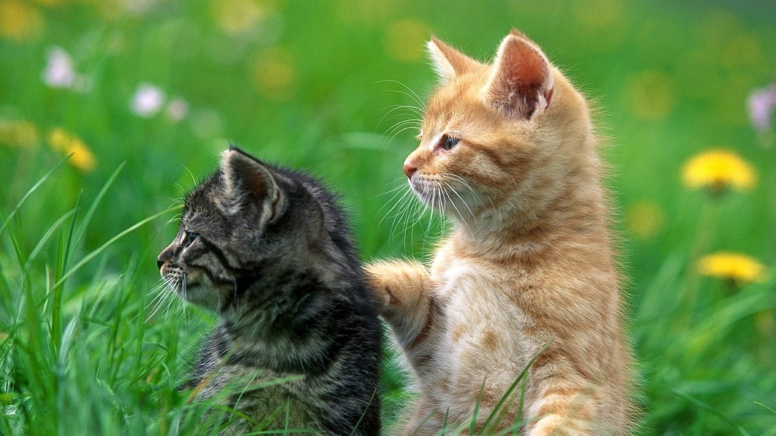 壁紙 かわいい黒猫と黄猫 1600x1200 Hd 無料のデスクトップの背景 画像