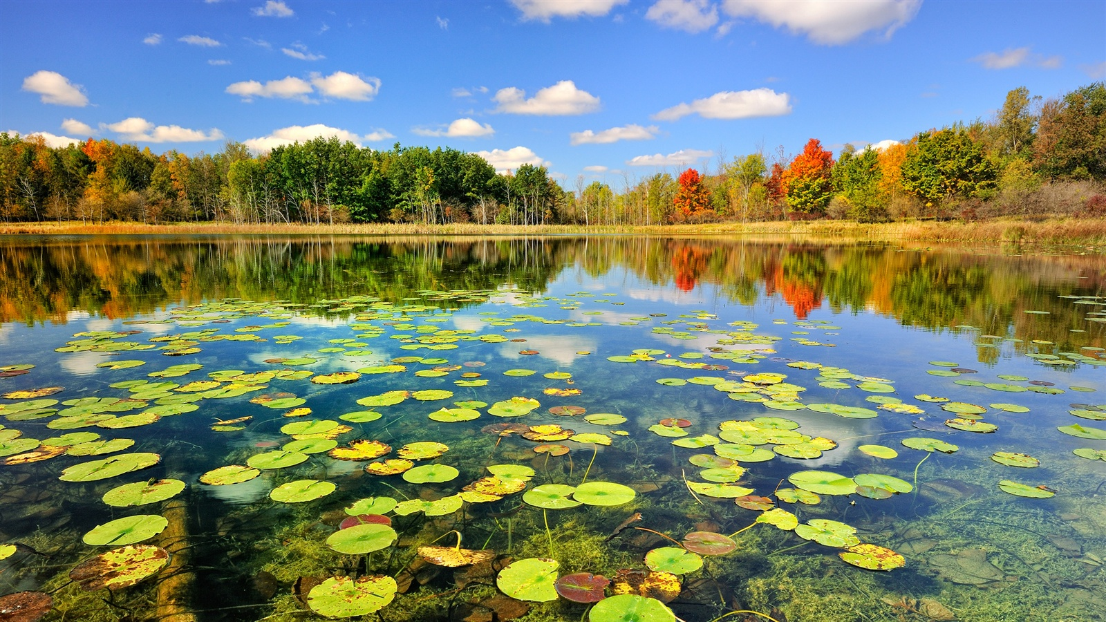 wallpaper nature autumn forest lake 2560x1600 hd picture, image
