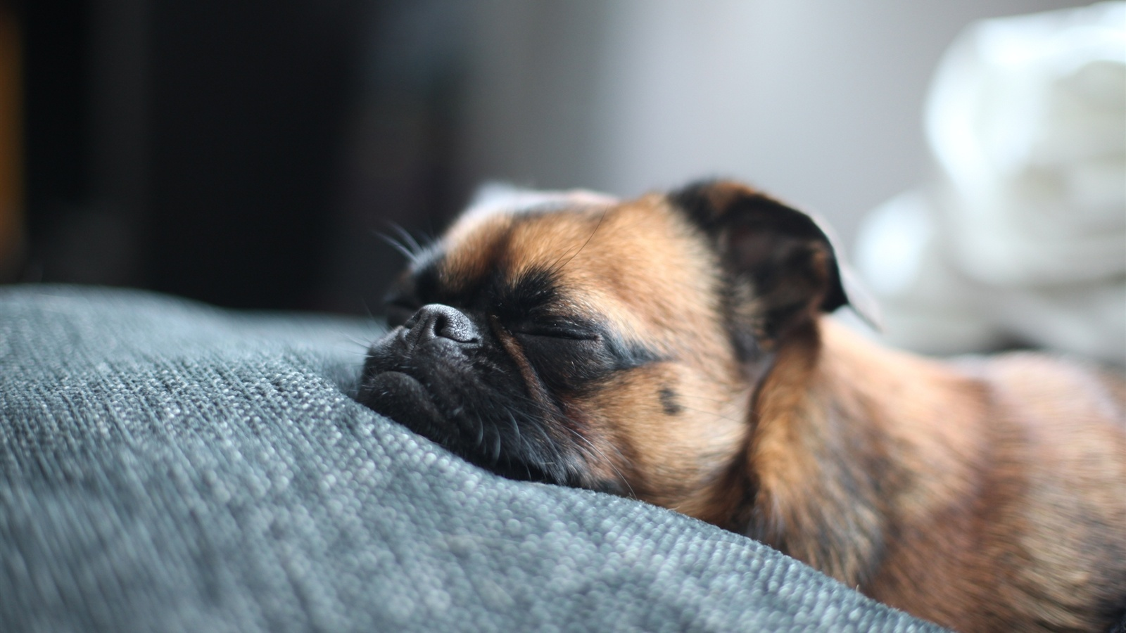 Wallpaper Sleeping Dog 2560x1600 Hd Picture Image