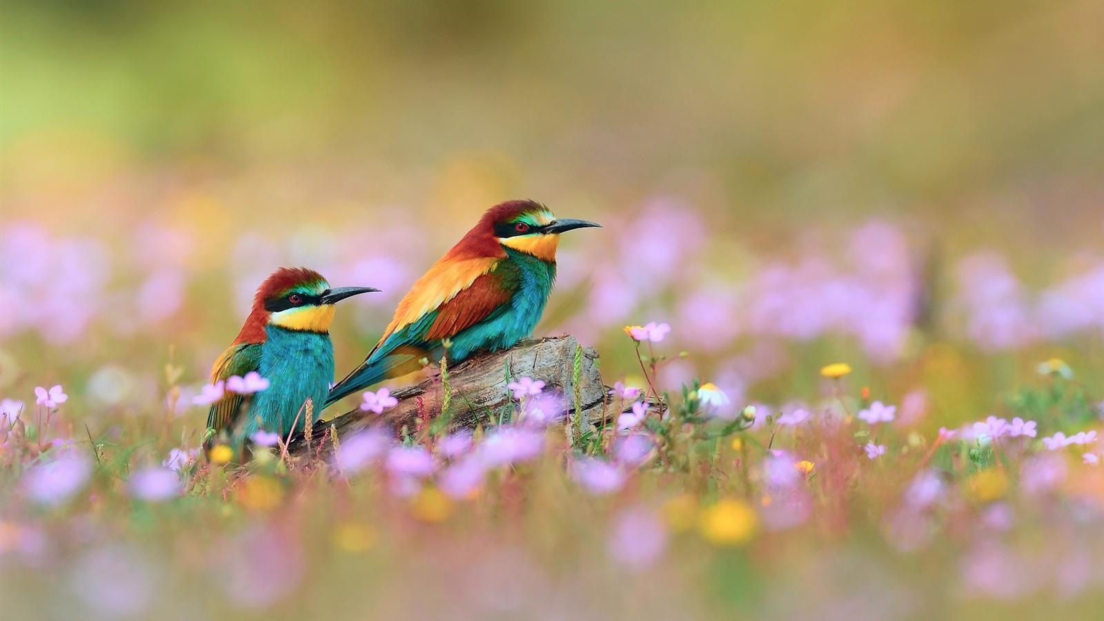 притаившиеся птички бесплатно