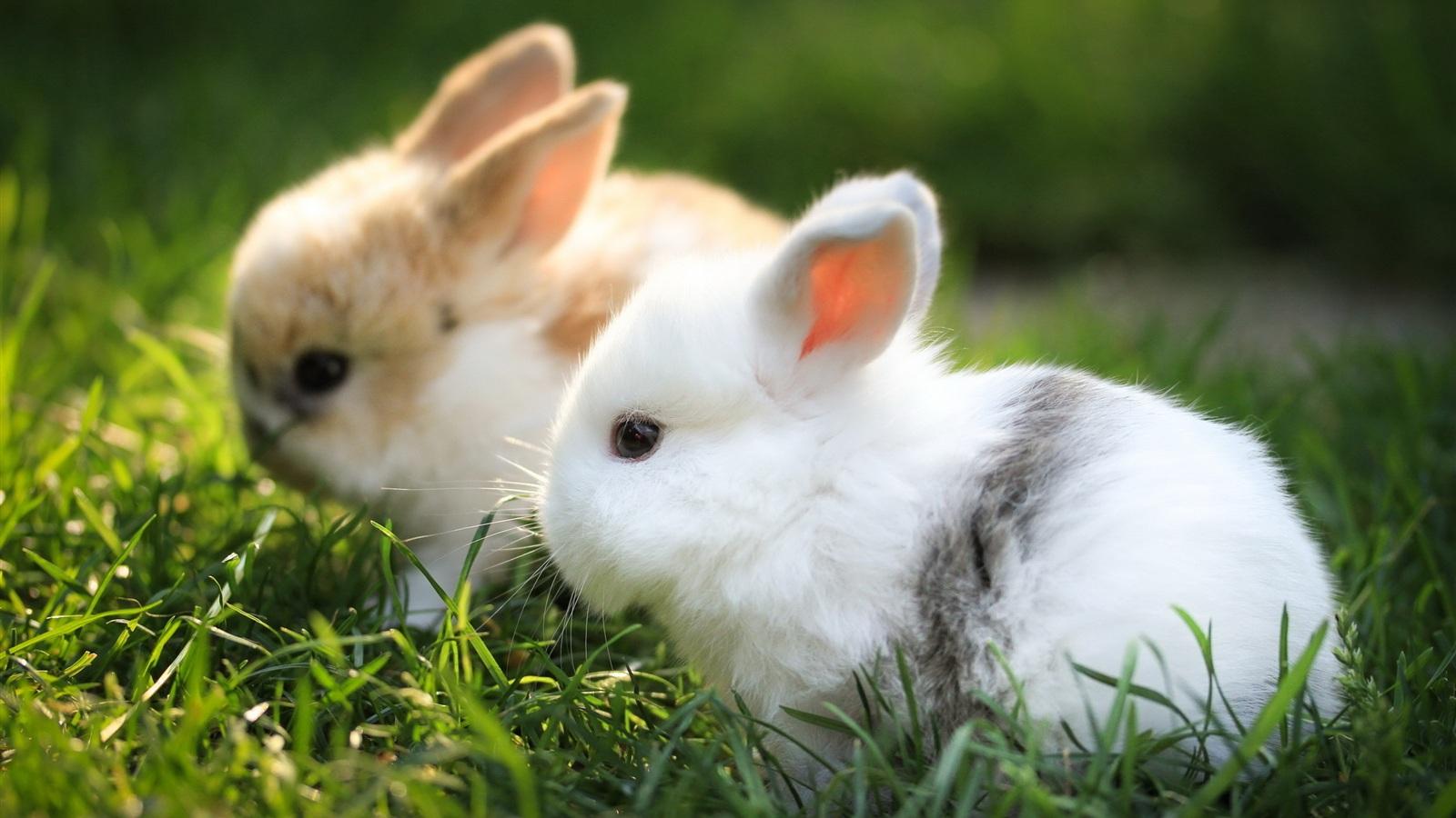 Cute White Rabbit Wallpapers For Desktop: Nagetiere Hasen 2560x1600 HD Hintergrundbilder, HD, Bild
