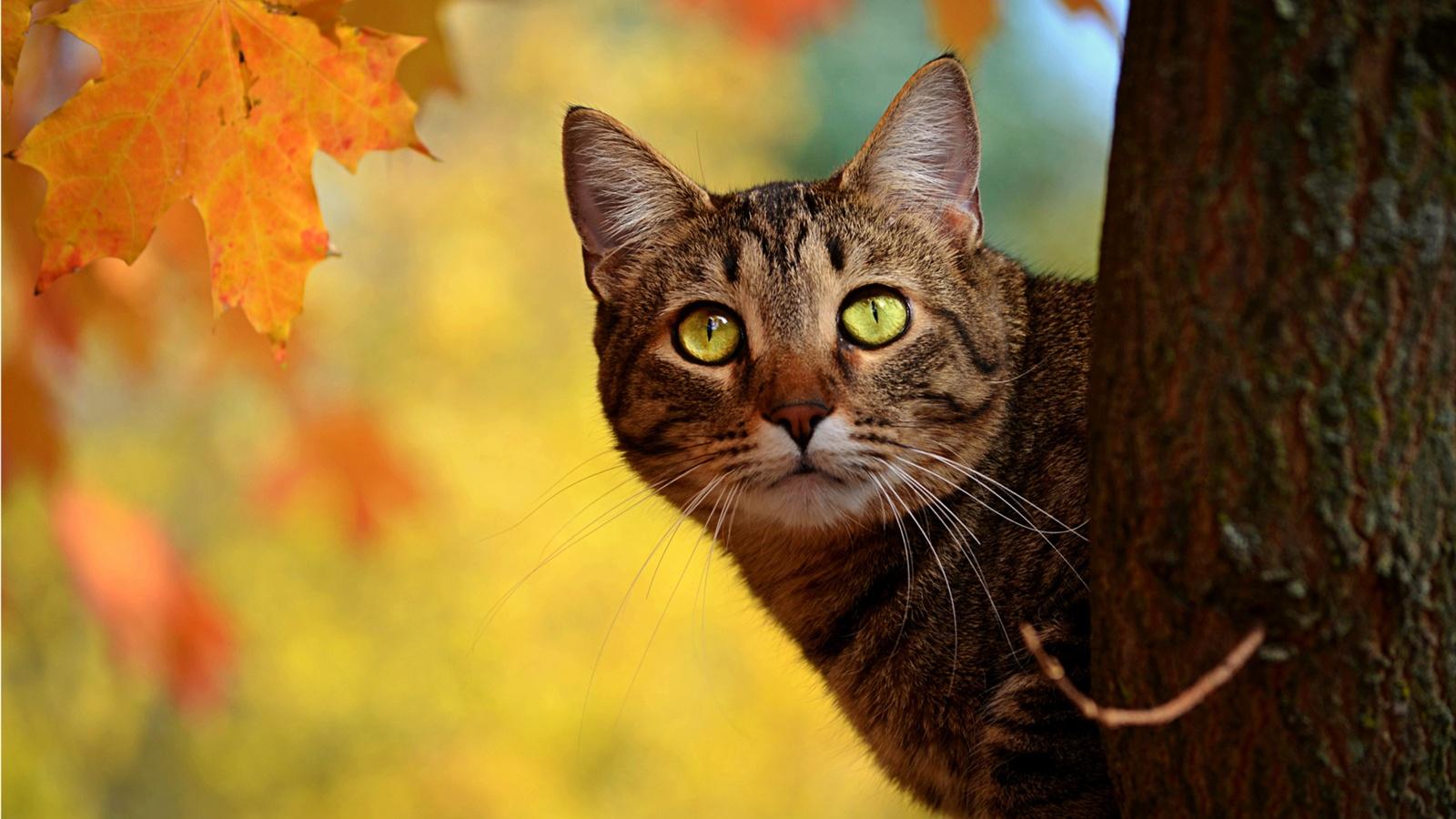 壁紙 秋猫覗き 黄色の葉 1920x1200 Hd 無料のデスクトップの背景 画像