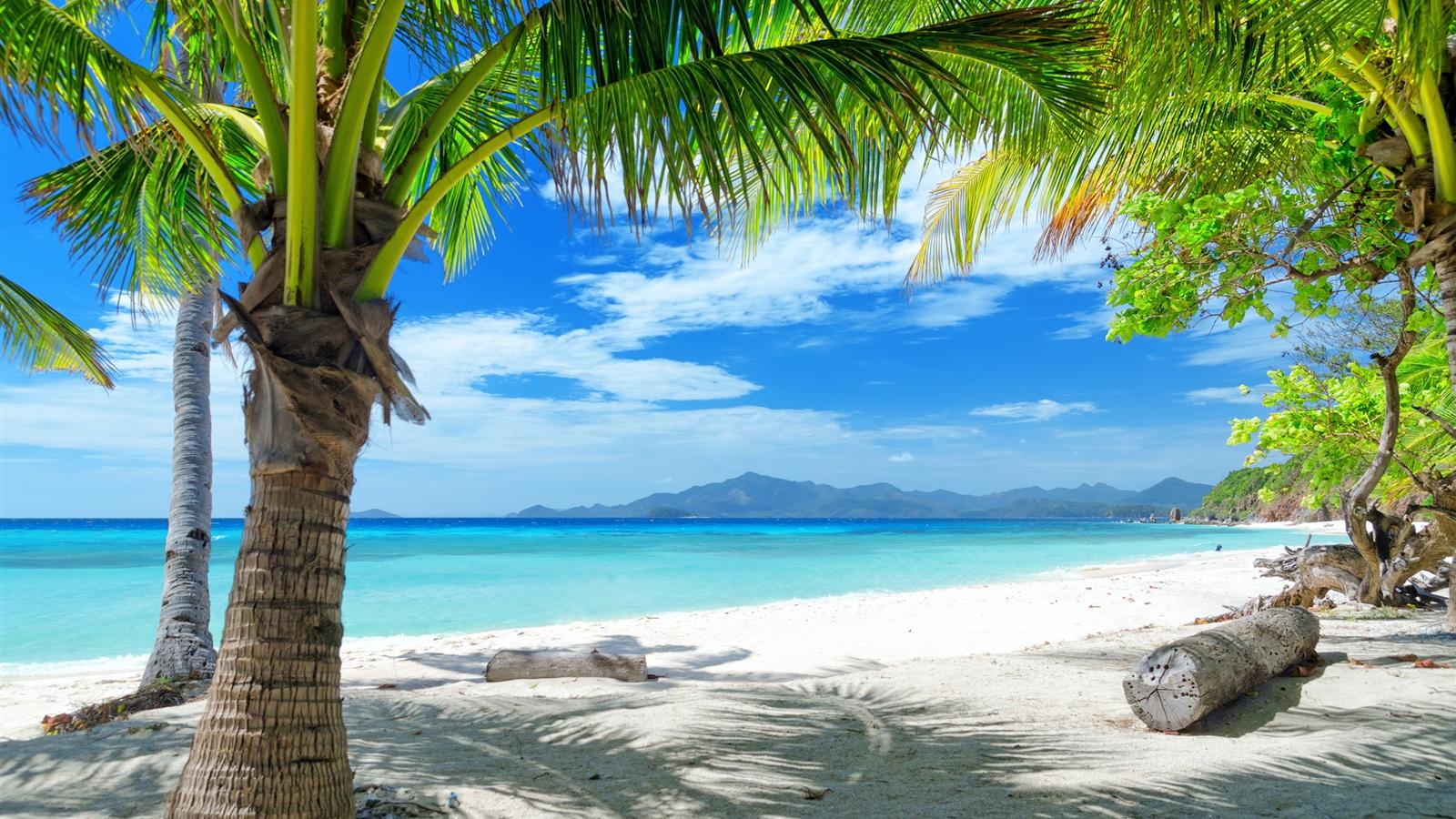 夏のビーチ、砂浜、ヤシの木 壁紙 - 1600x900