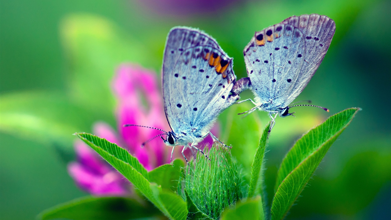 Wallpaper Spring Nature Butterfly Green Leaves Flower 2560x1600