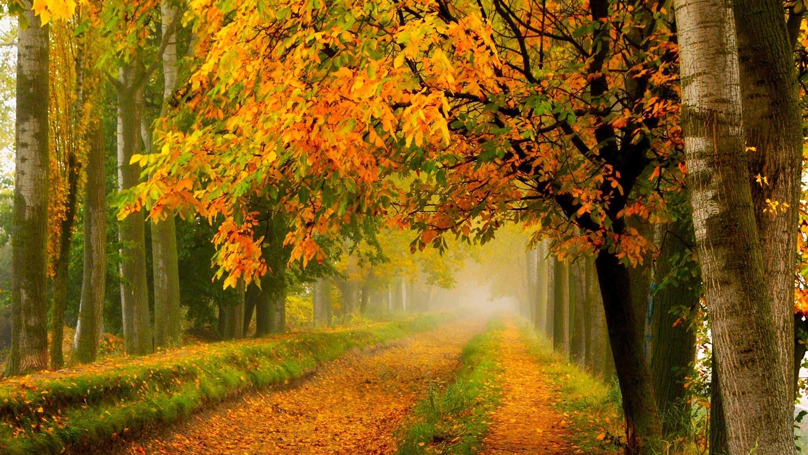 Automne nature parc for 234 t arbres feuilles jaune routiers fonds d