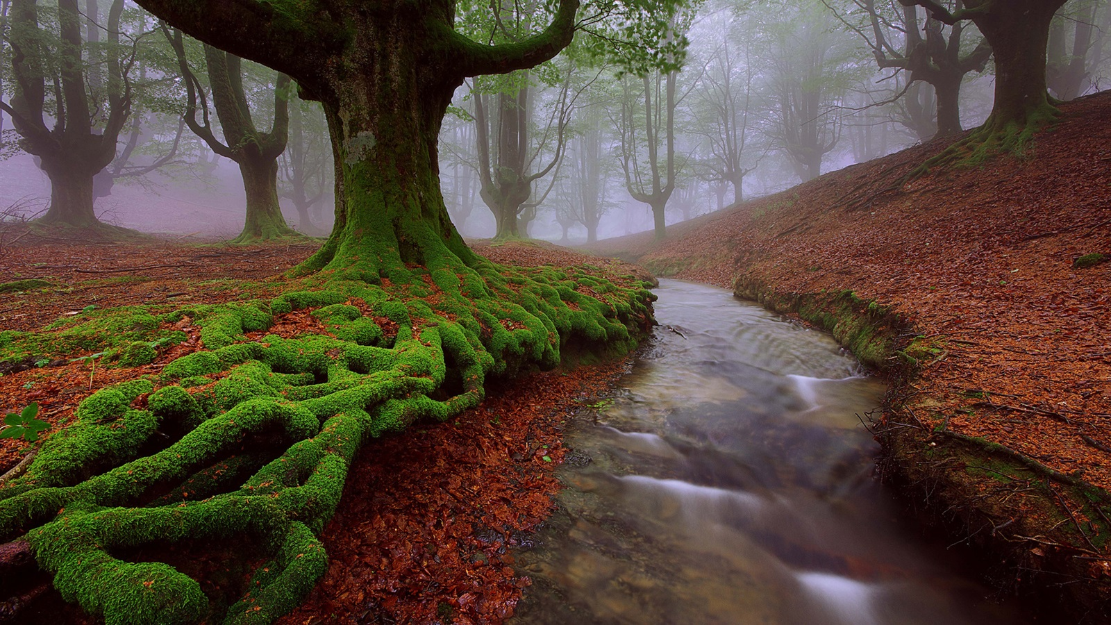 Download Wallpaper 1600x900 Spain Basque Country Trees