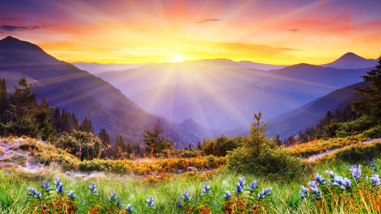Best Nature Picture Free Download